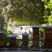 Rucher jardin du luxembourg2